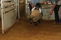 Mutton Bustin' Saturday Group 3